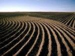 winterwheat2.jpg