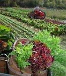 org_farm_01.jpg